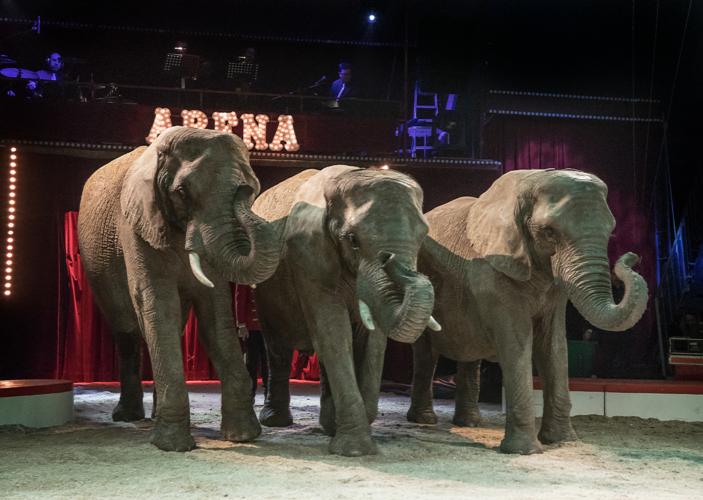 Staten køber pensionerede cirkuselefanter for 11 millioner kroner
