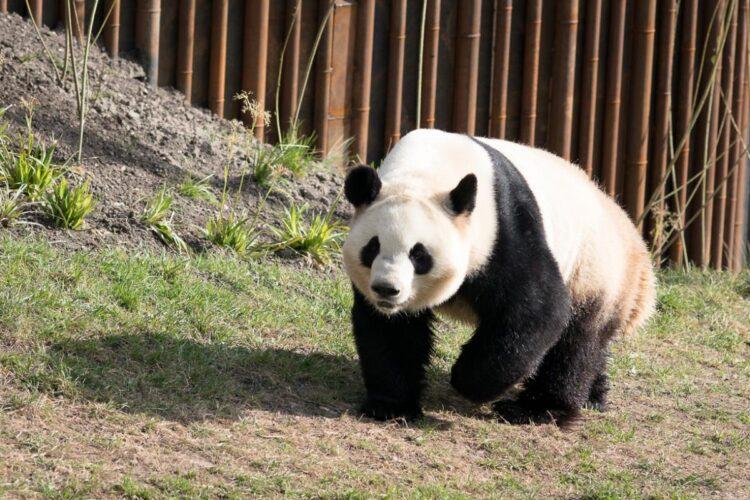 Zoologisk Have åbner lørdag 23/5-2020
